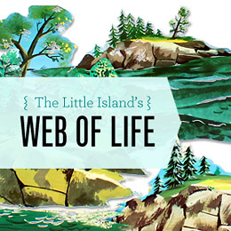 Make Nice Mission The Web Of Life